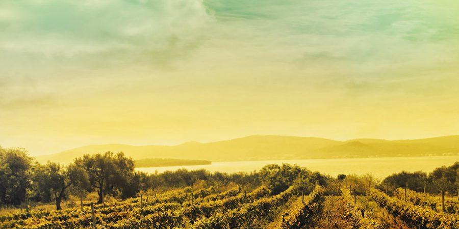 Esbjergs eneste specialbutik for vininteresserede